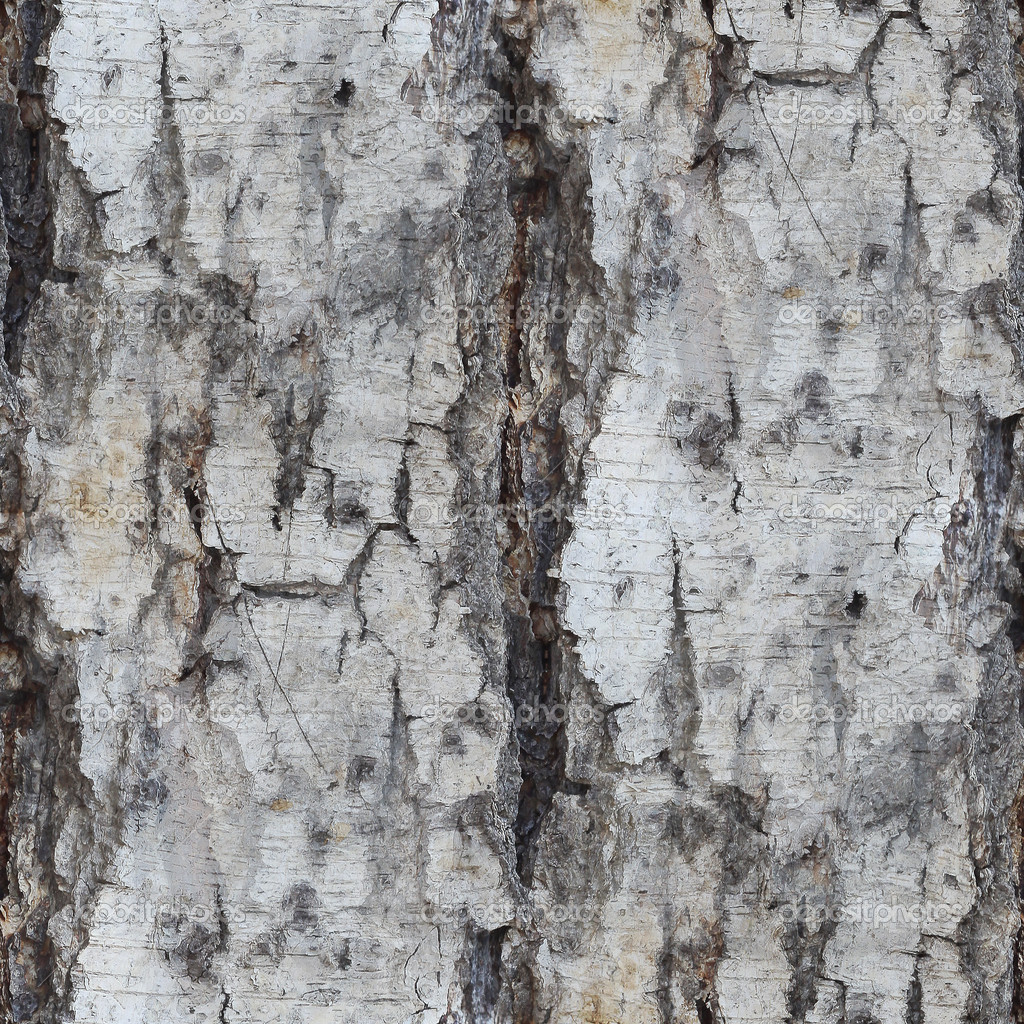 Birch Bark Wallpaper With Texture