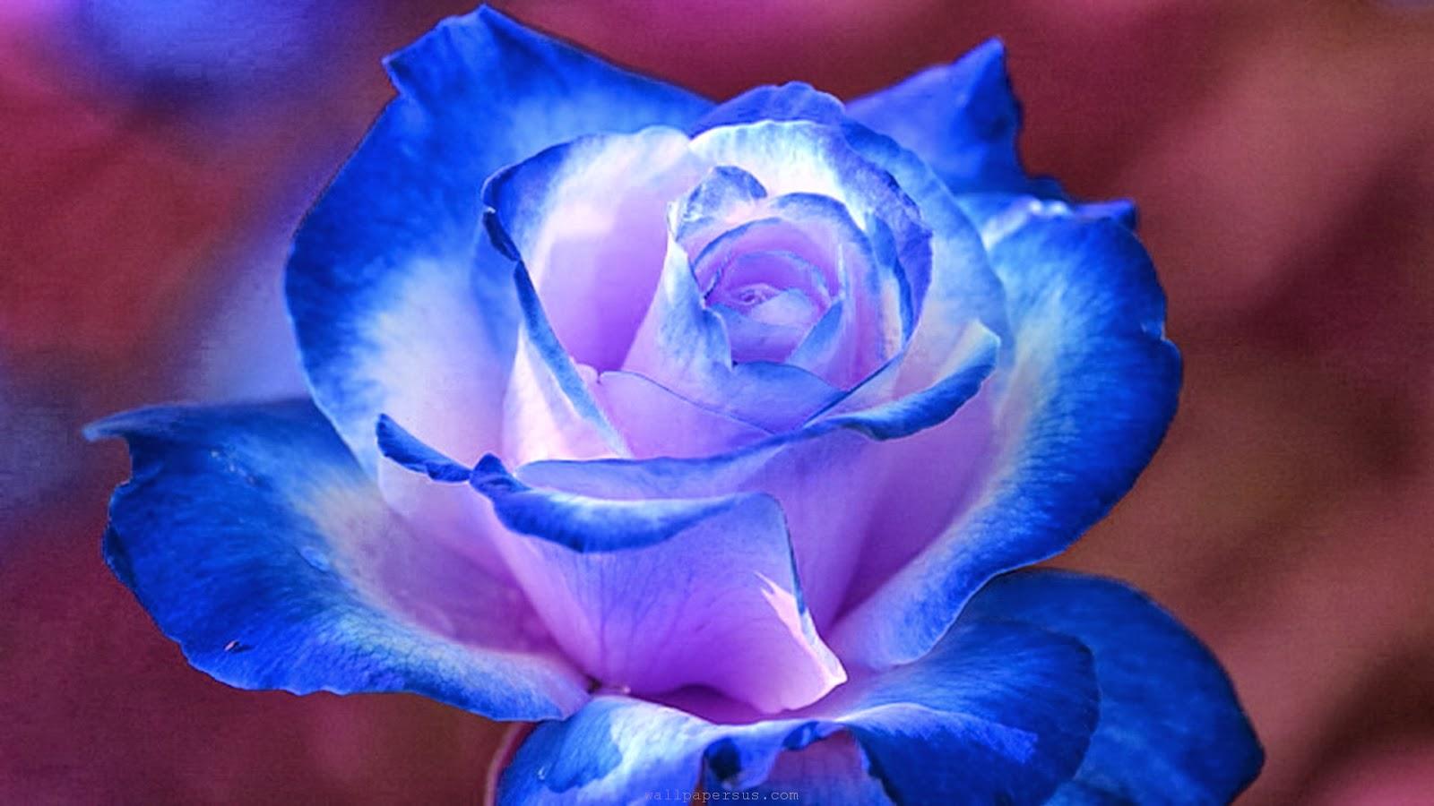 HD Wallpapers Desktop Blue Flower HD Wallpapers 1600x900