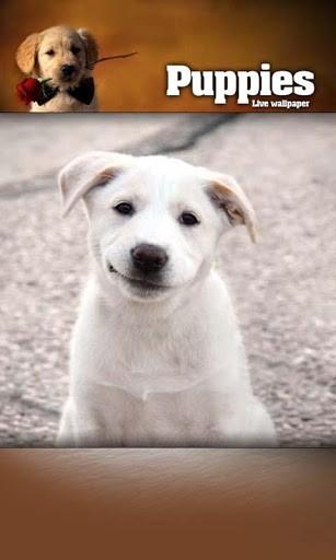 100 Puppy Live Wallpaper Pictures - WallpaperSafari