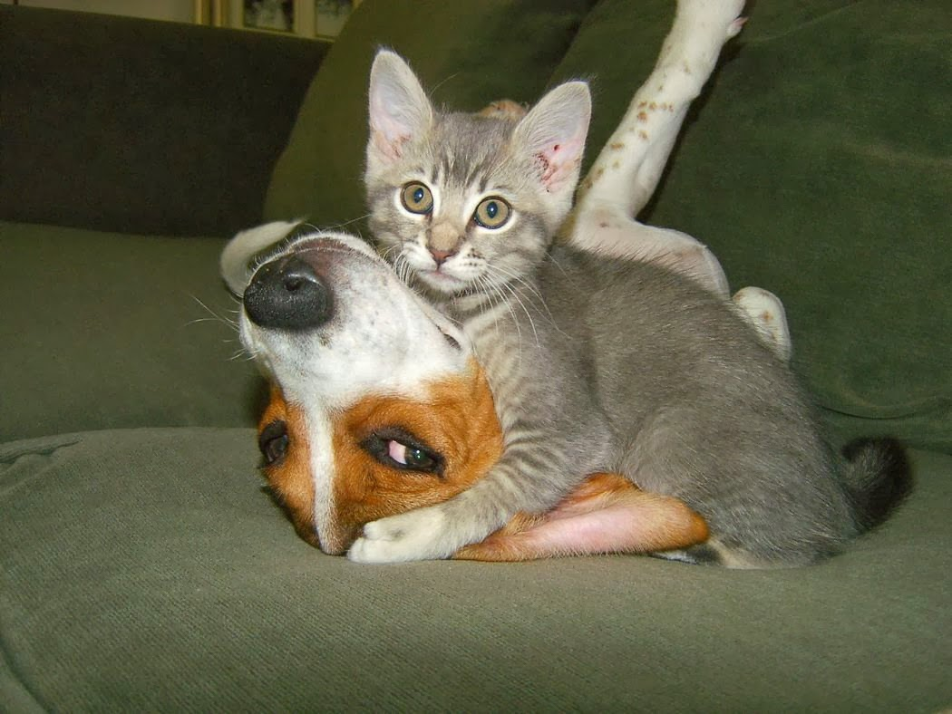 Cute Funny Animalz Funny Animal Love Pictures And Wallpapers 2013 1050x788