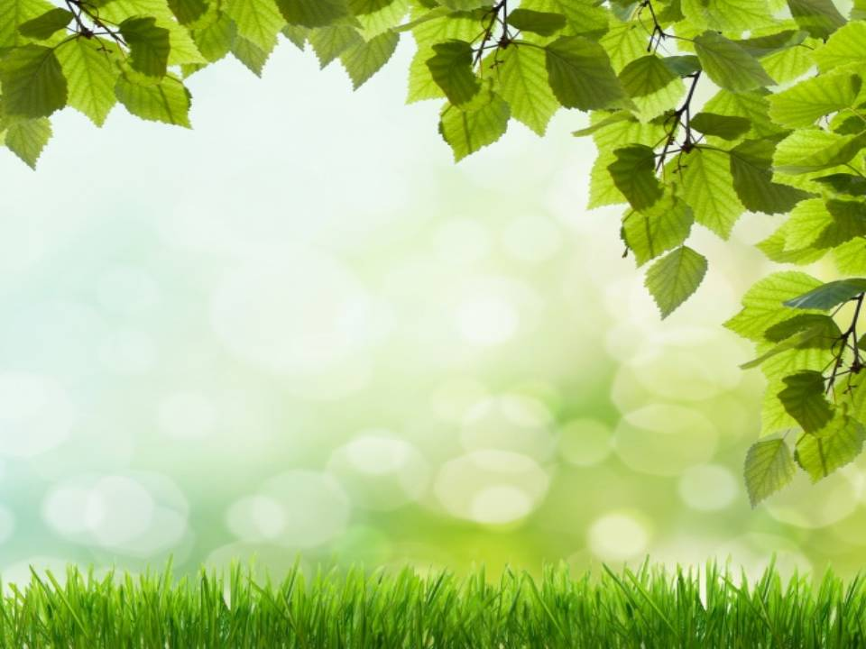 Free Download Beautiful Green Grass Backgrounds For