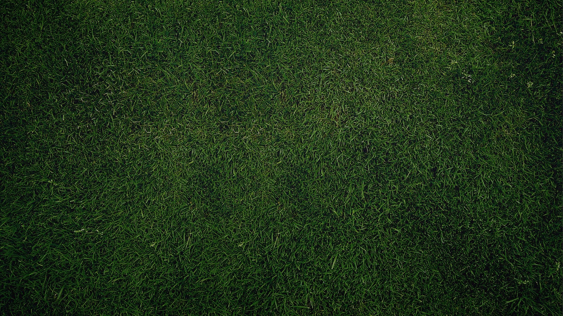 1920x1080 Green Grass Background desktop PC and Mac wallpaper 1920x1080