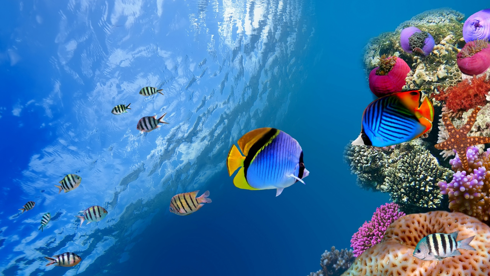 Underwater Ocean Scene Wallpaper   Viewing Gallery 1920x1080