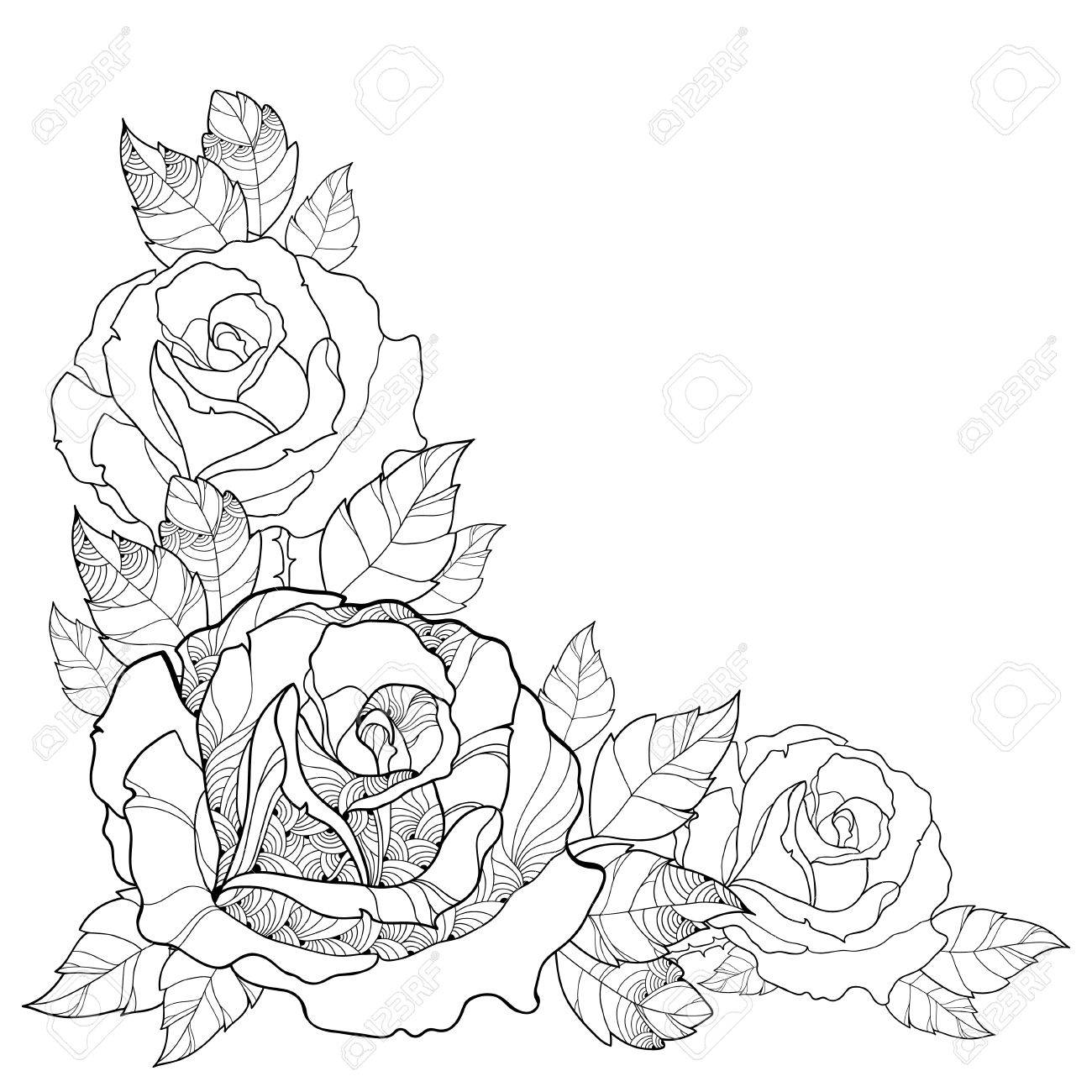 Illustration With Outline Rose Flower And Foliage Isolated On 1300x1300