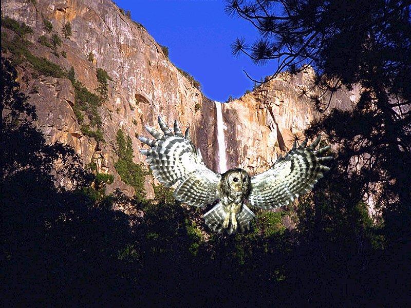 Yosemite Wallpaper 800x600