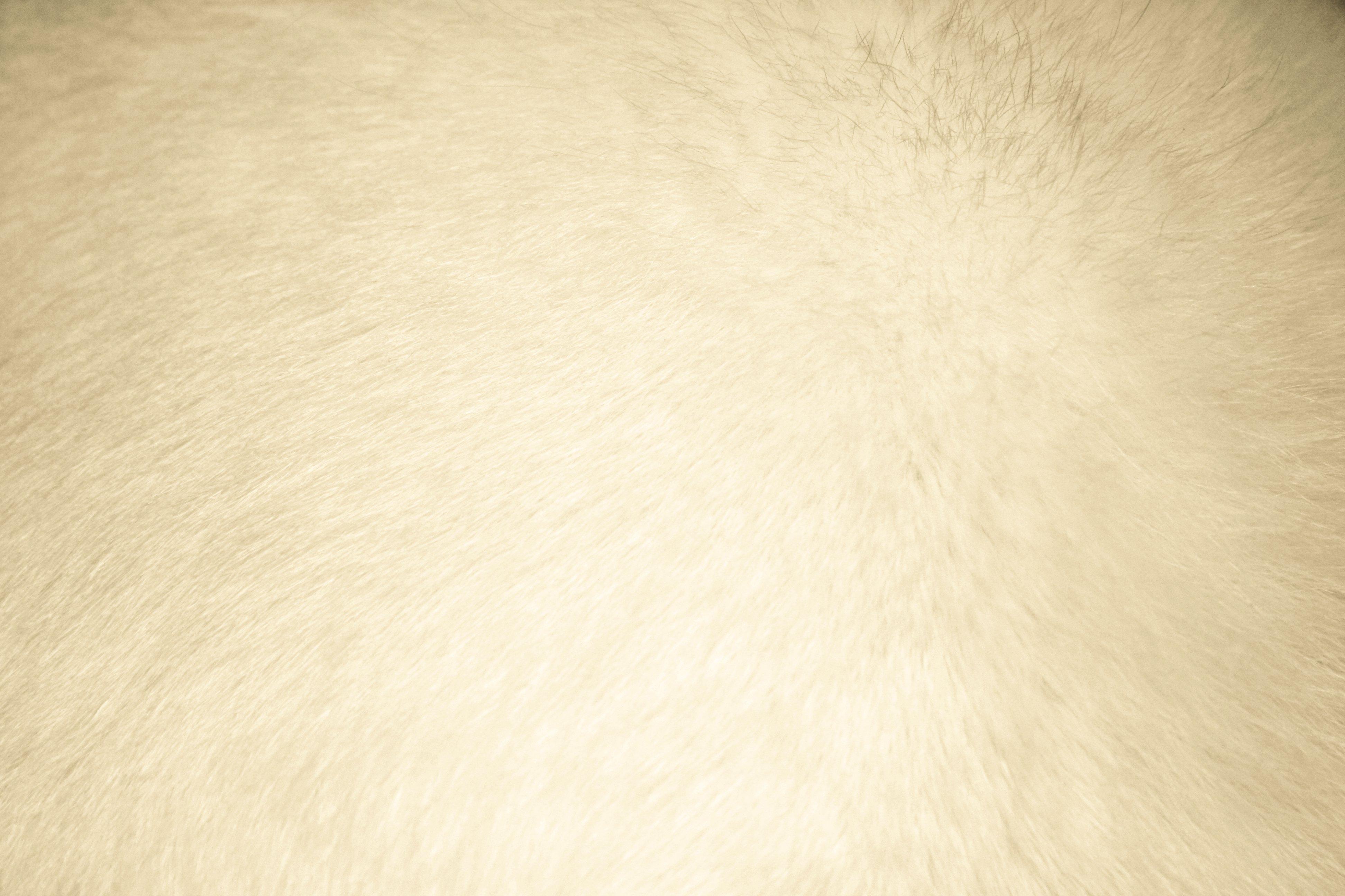 Beige Fur Texture   High Resolution Photo   Dimensions 3888 3888x2592