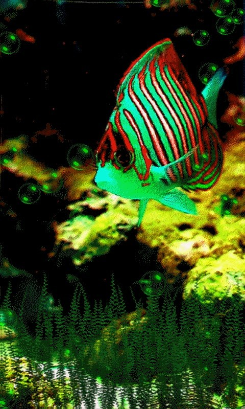 Bubble Fish live wallpaper Android Live Wallpaper download 480x800