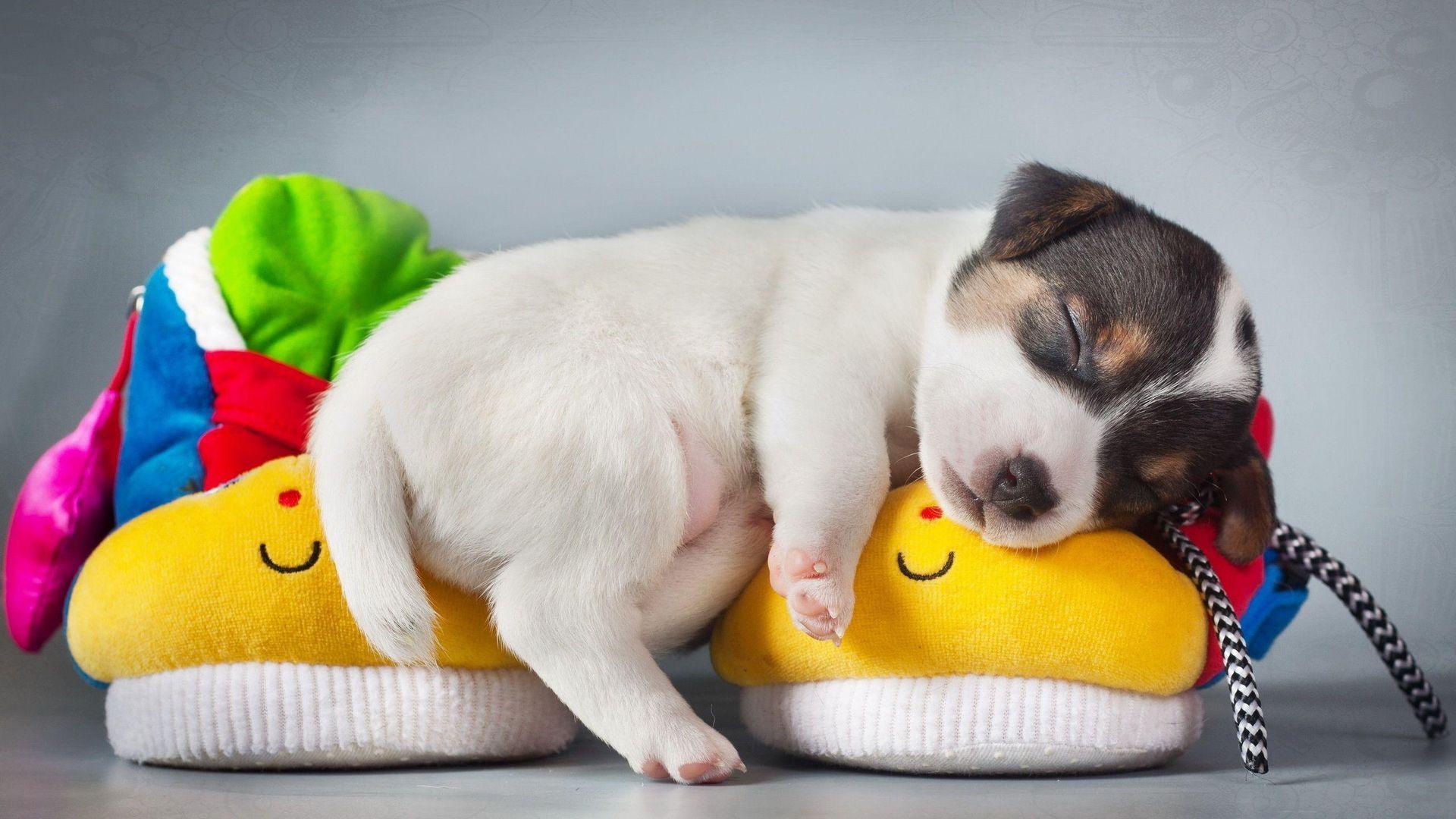 Pet Cute Puppy Sleeping Wallpaper   Wallpaper Stream 1920x1080