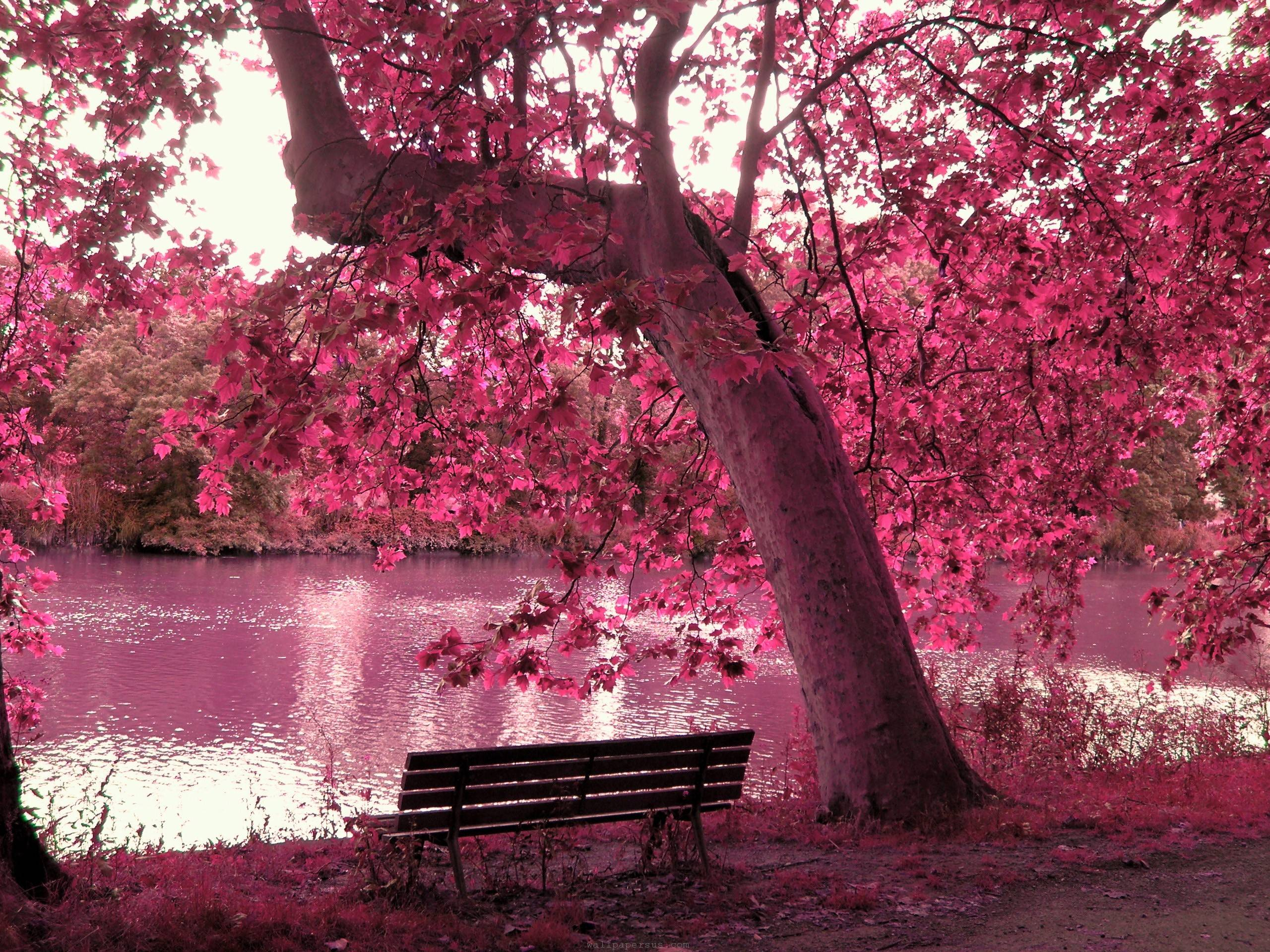 Pink Nature Wallpapers 2560x1920