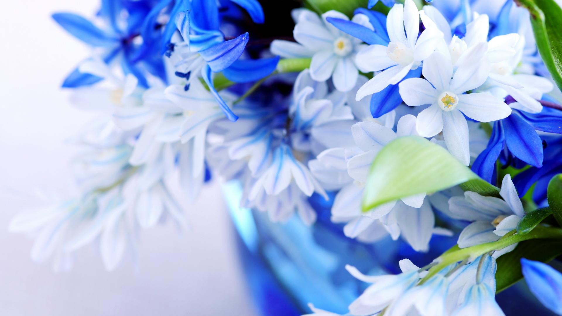 Full Screen Flowers For Desktop 1920x1080
