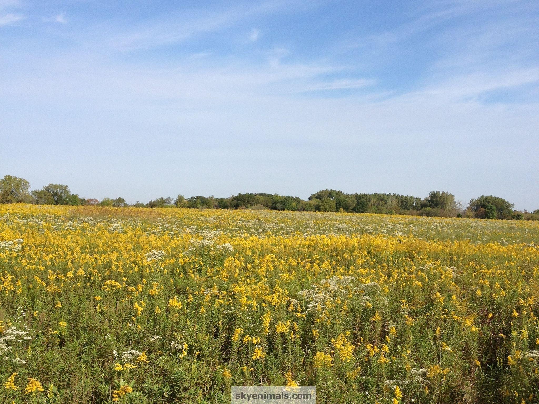 30 Illinois Prairie Wallpapers   Download at WallpaperBro 2048x1536