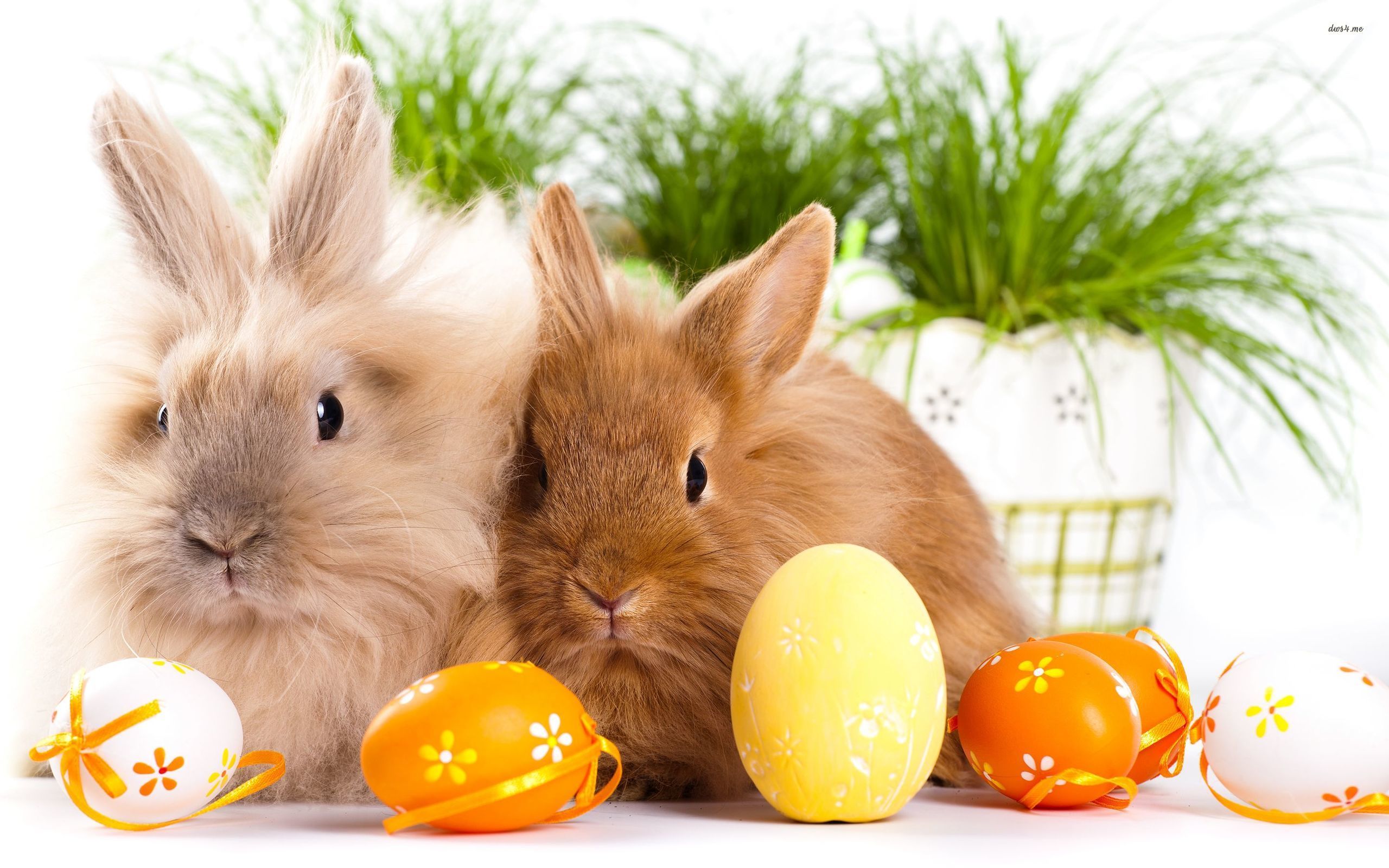 My Fanpop Friends and I images bunnies and eggs on easter day HD 2560x1600