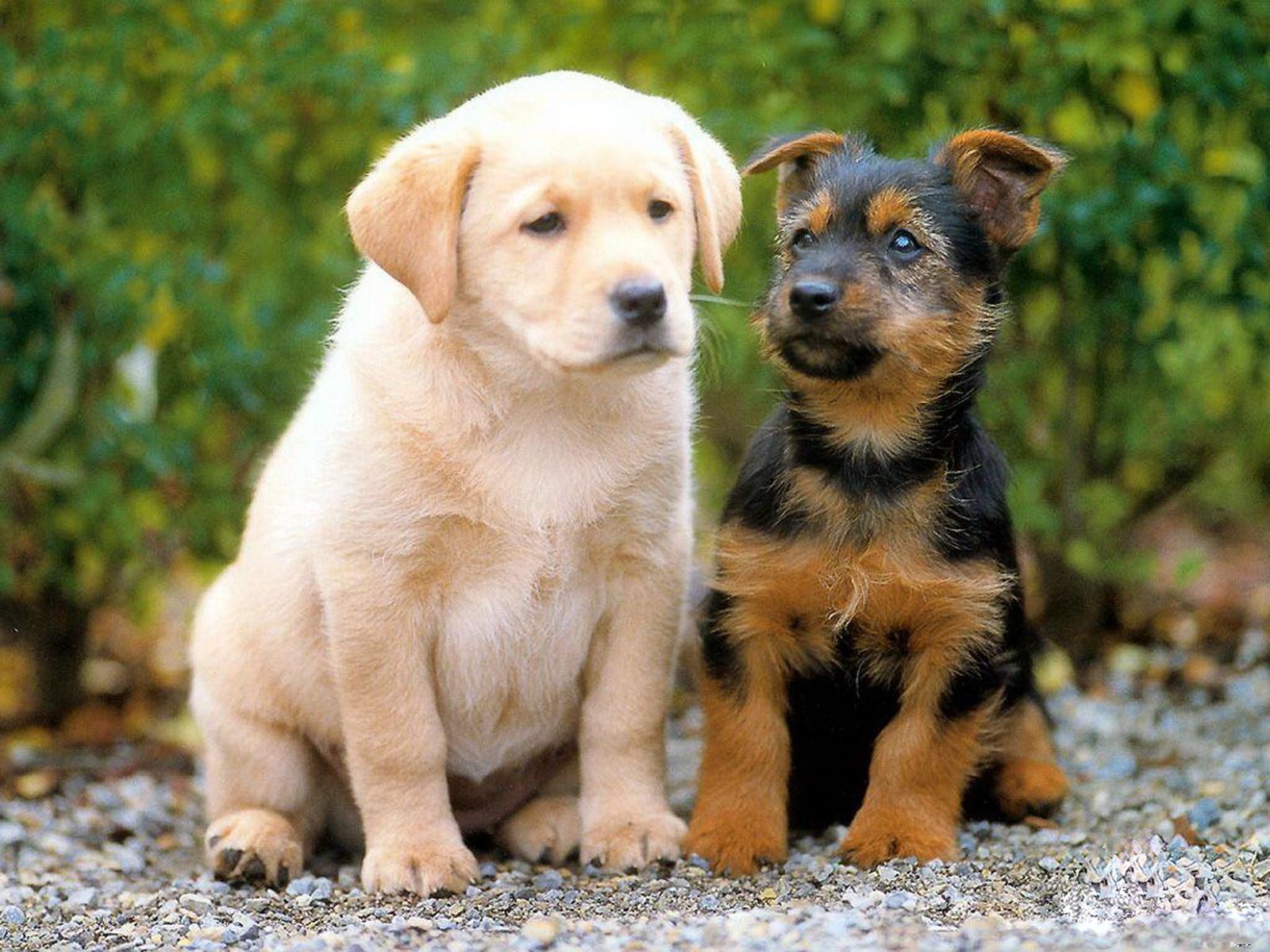 Dogs   Wallpapers Pictures Pics Images Photos Desktop 1600x1200