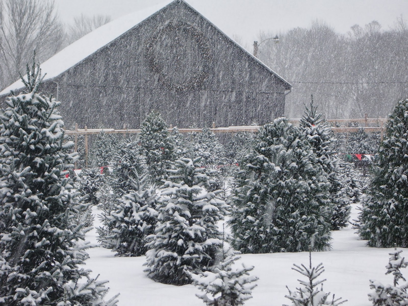 farmhouse christmas trees pinterest