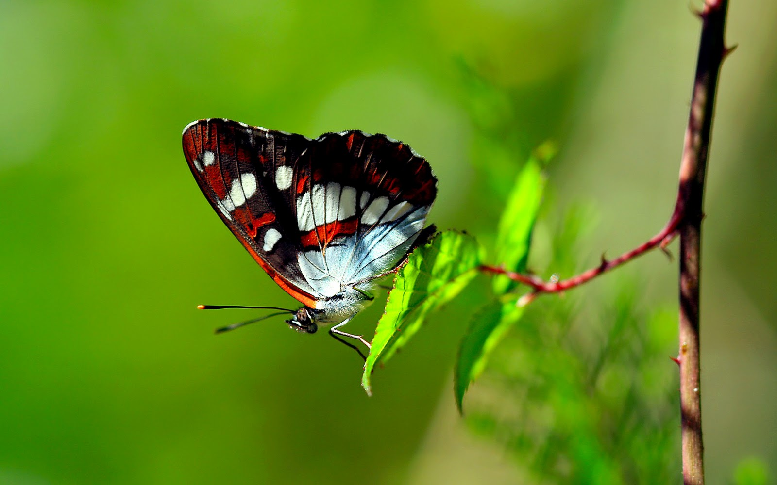 Colors of Nature HD Butterfly Wallpapers HD Wallpapers 1600x1000