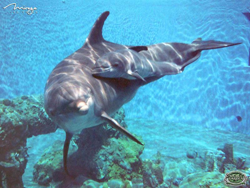 dolphins wallpapers dolphins wallpapers dolphins wallpapers dolphins 800x600