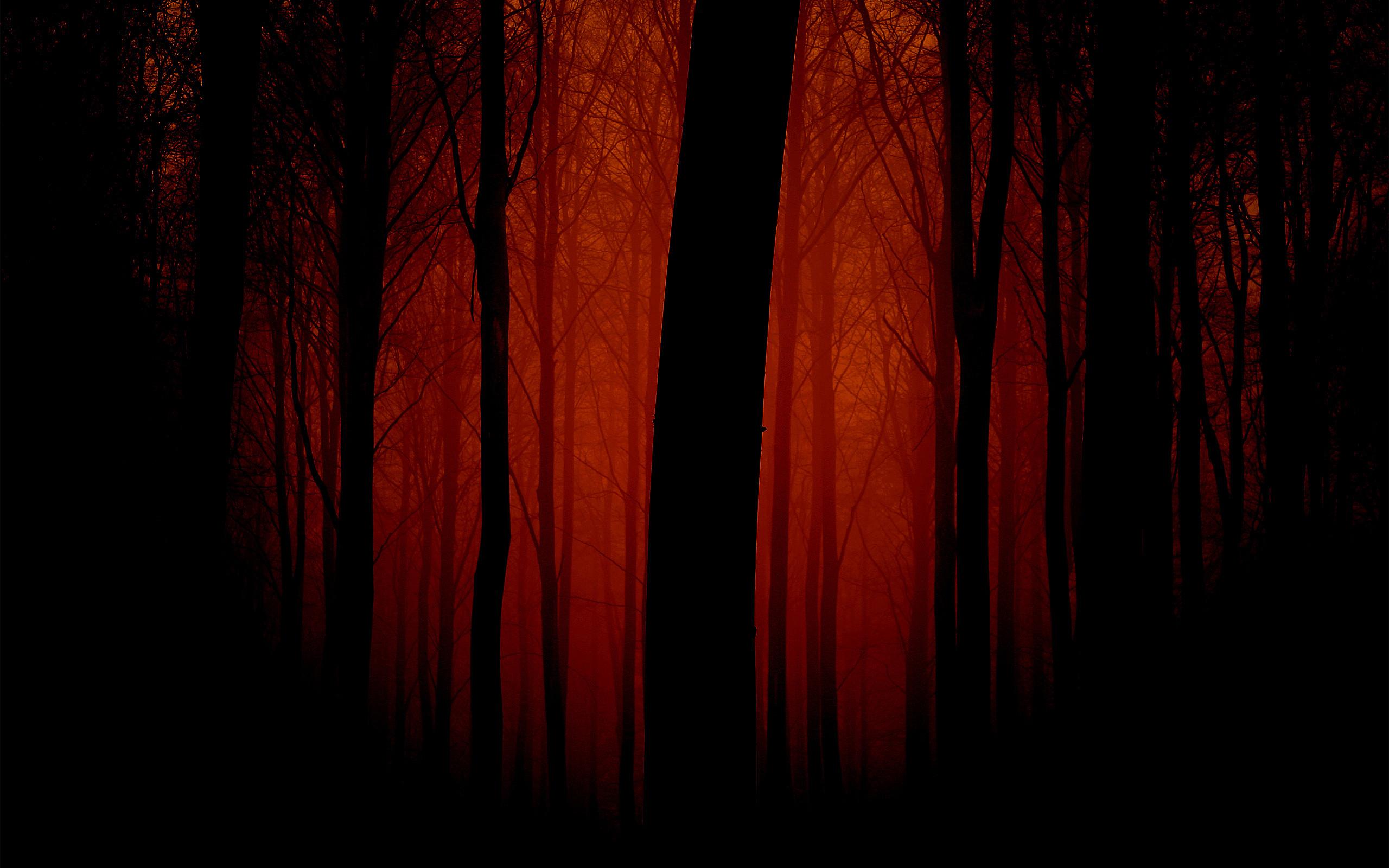 dark forest widescreen wallpaper - photo #41