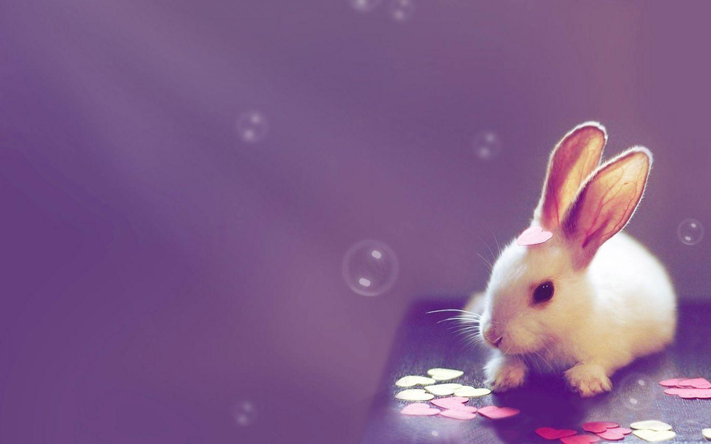 Cute Backgrounds For Desktop 1440x900
