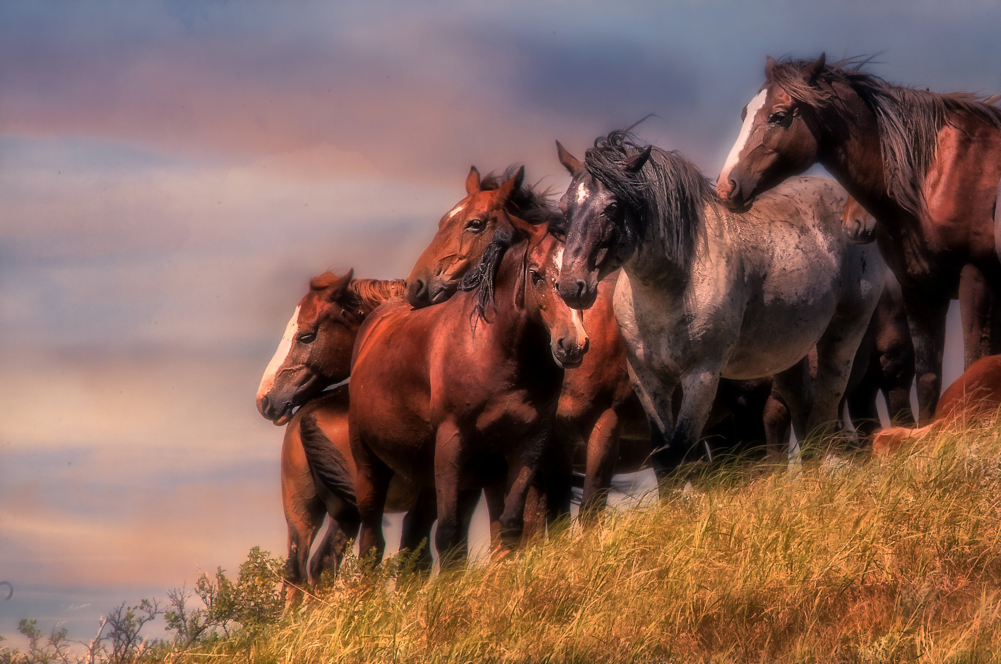 Wallpaper horses field as taboo wallpapers animals   download 2048x1358