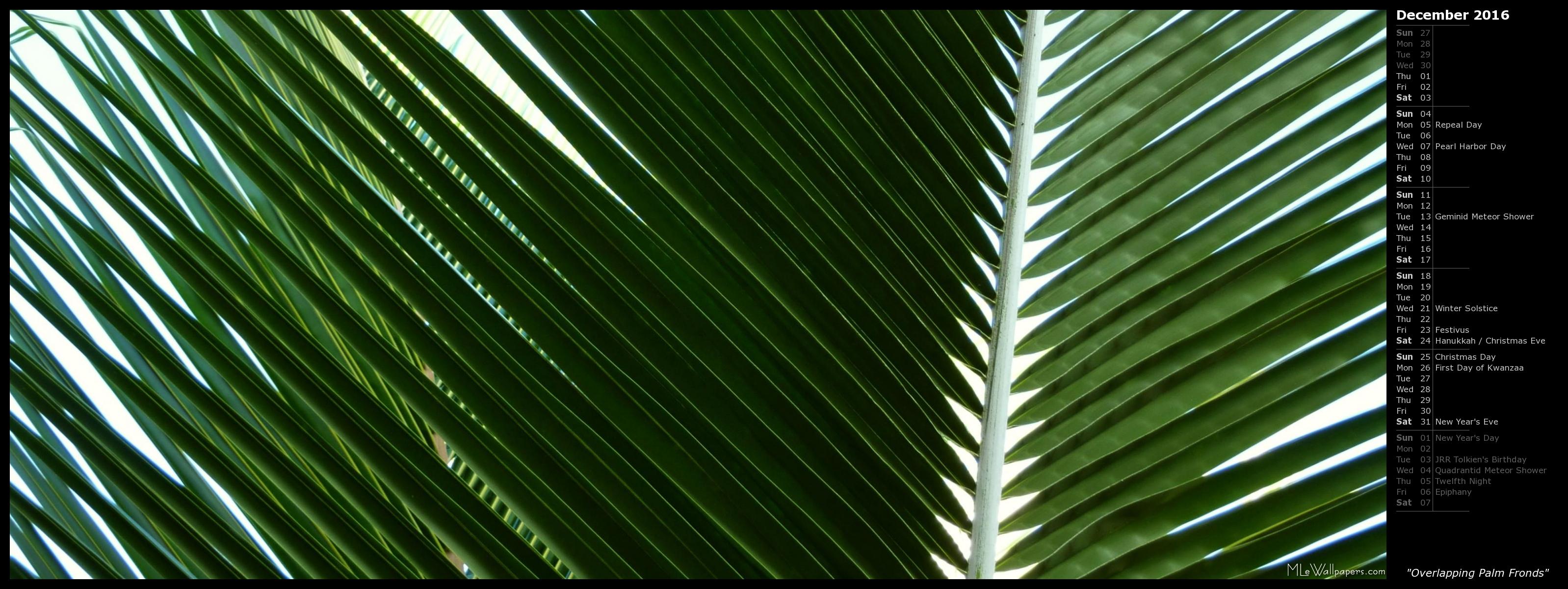 MLeWallpaperscom   Overlapping Palm Fronds Calendar 3196x1200