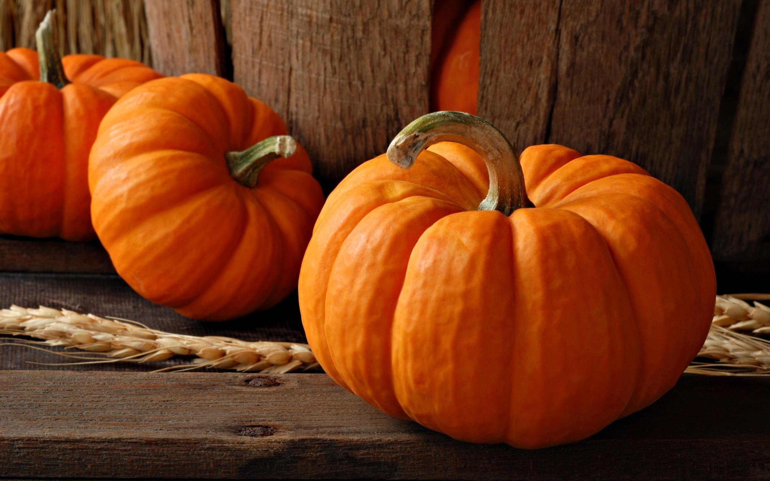 Pics Photos   Pumpkin Face Wallpapers Hd 2560x1600