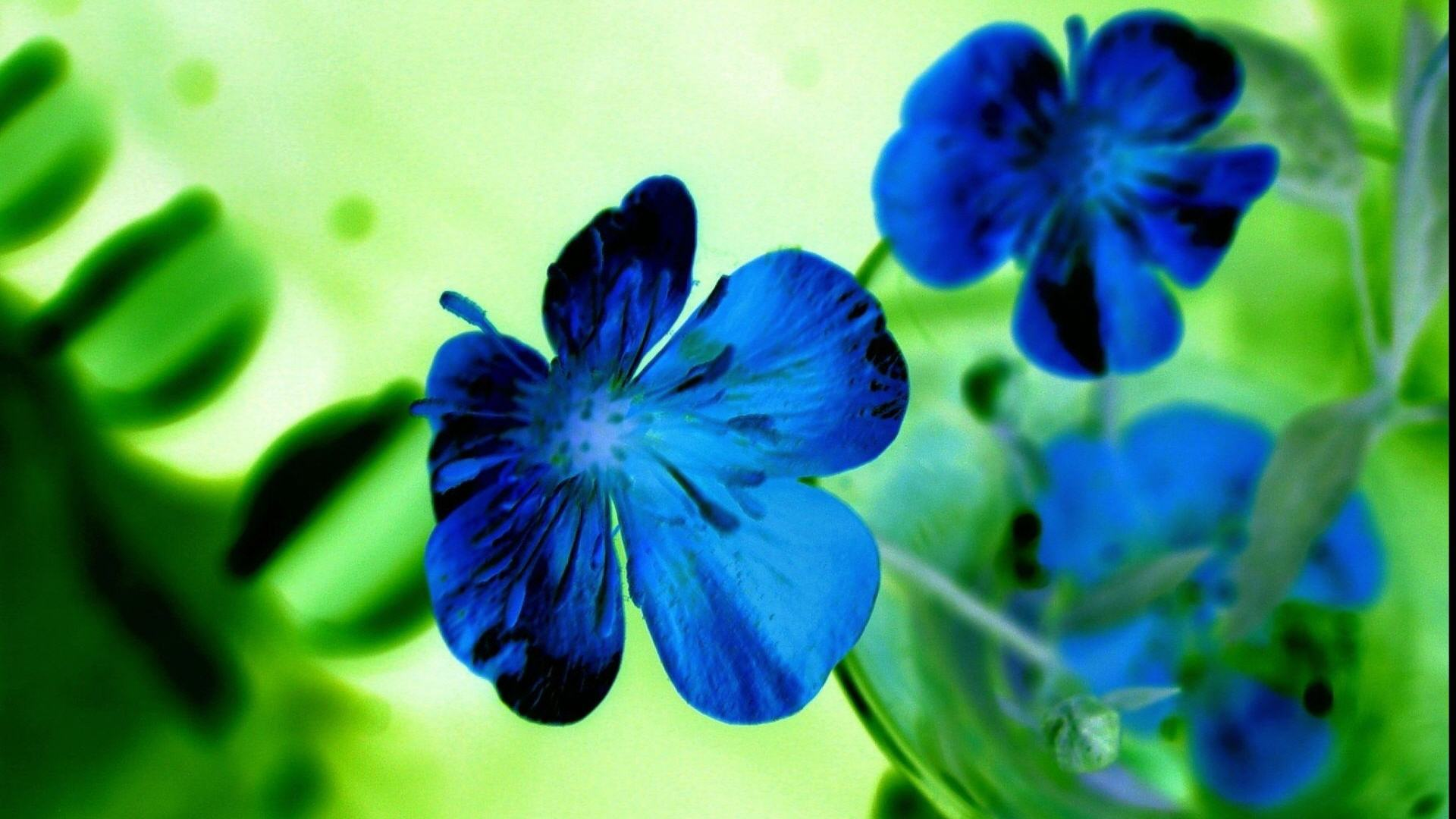 Beautiful Blue Flowers HD Desktop Wallpaper HD Desktop Wallpaper 1920x1080