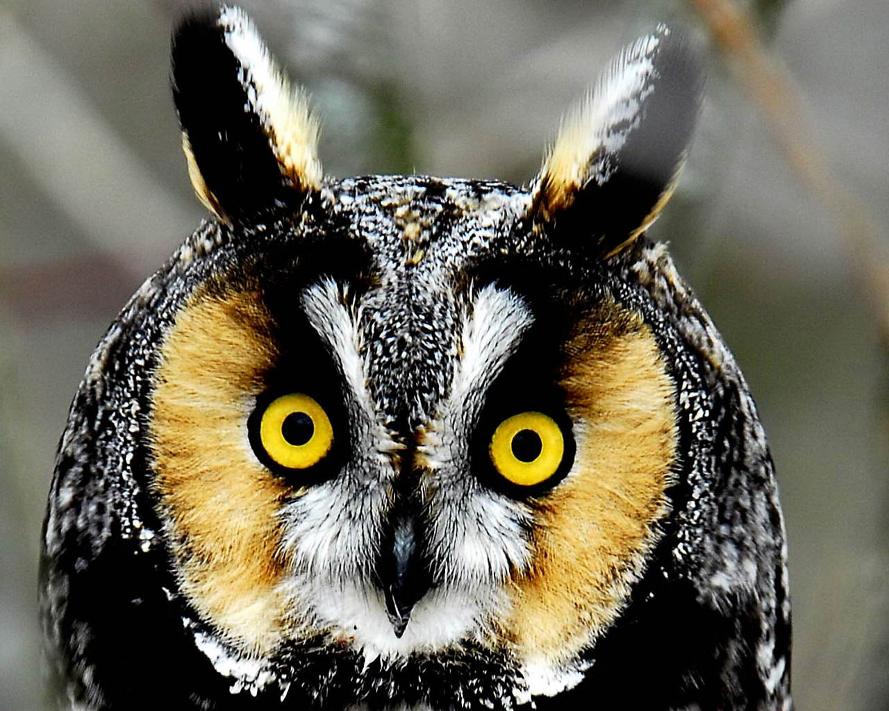 Download Cute Owl Wallpapers   Page 3 of 3   WallpaperHDwiki 1280x1024
