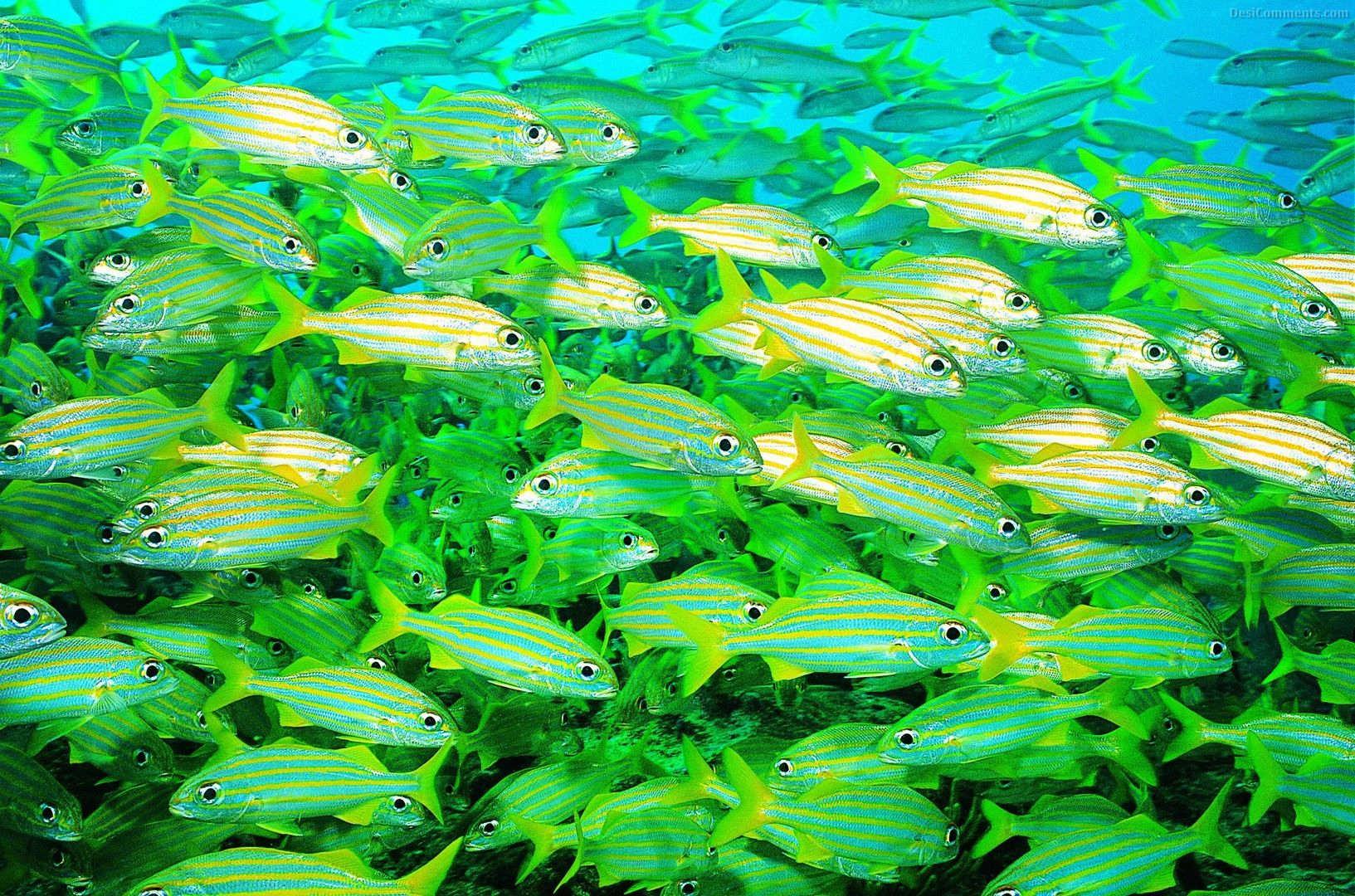 Life Underwater Wallpaper 76 1633x1080