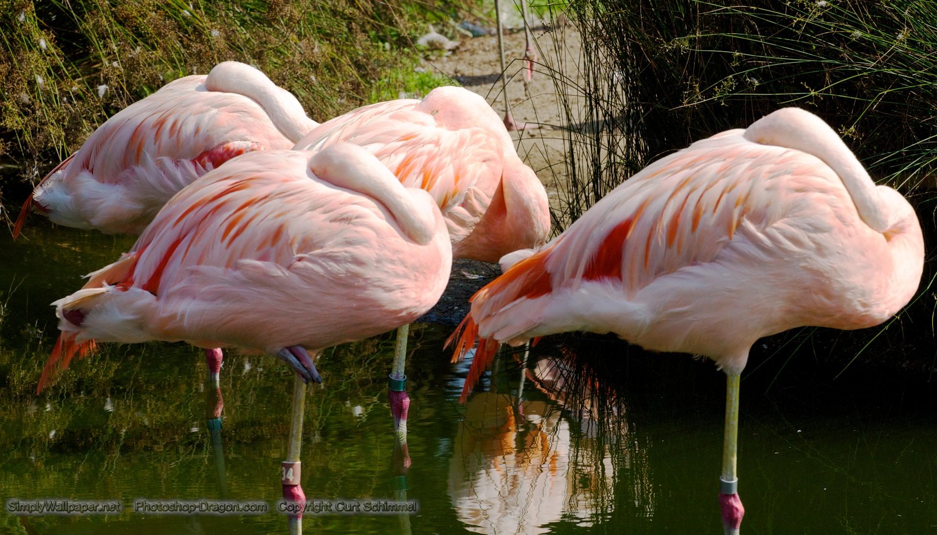 46 Pink Flamingo Wallpaper On Wallpapersafari