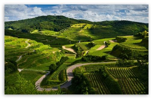 Veeyard Meaning: Vineyard Desktop Wallpaper