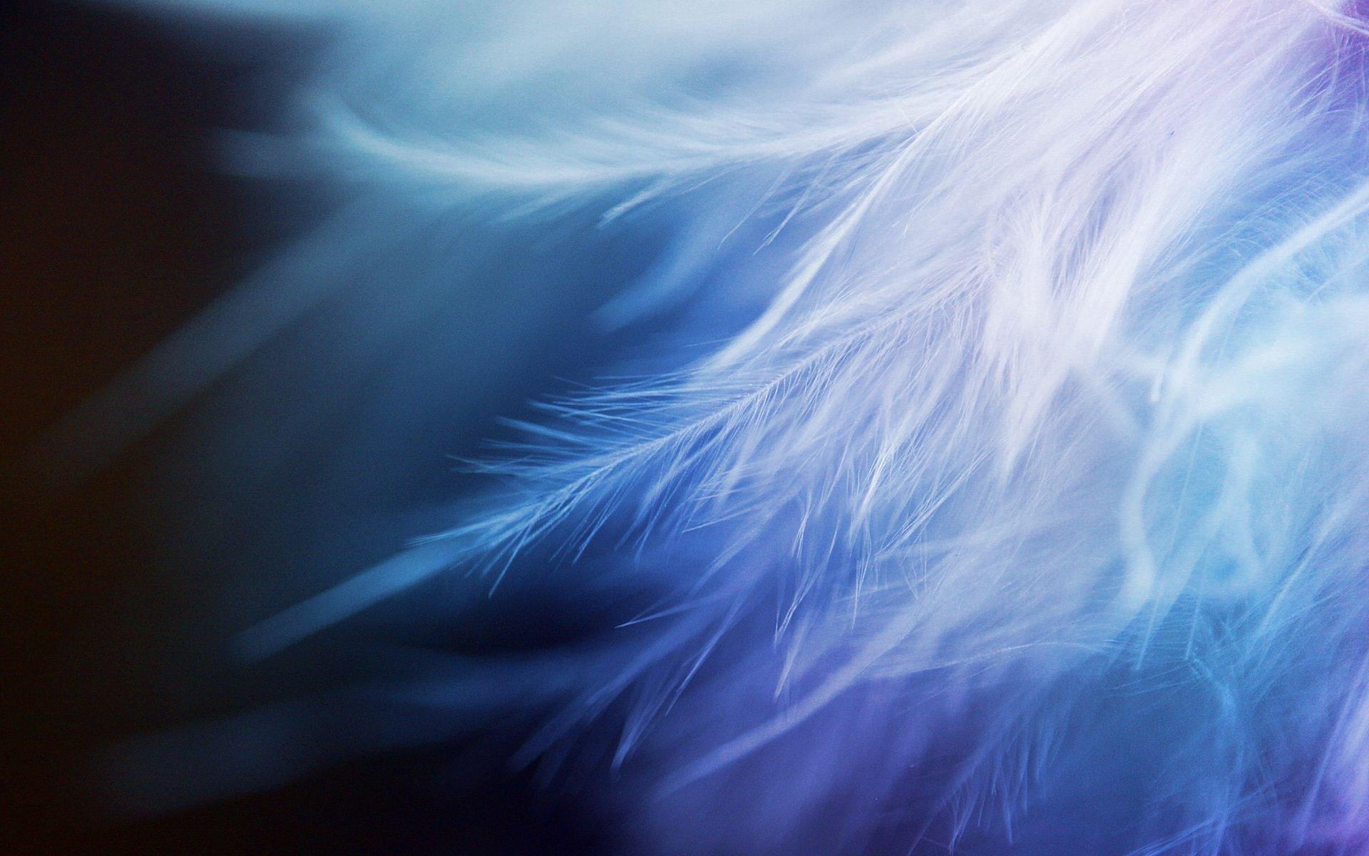 White Feather Closeup wallpaper 1920x1200 726850 1920x1200