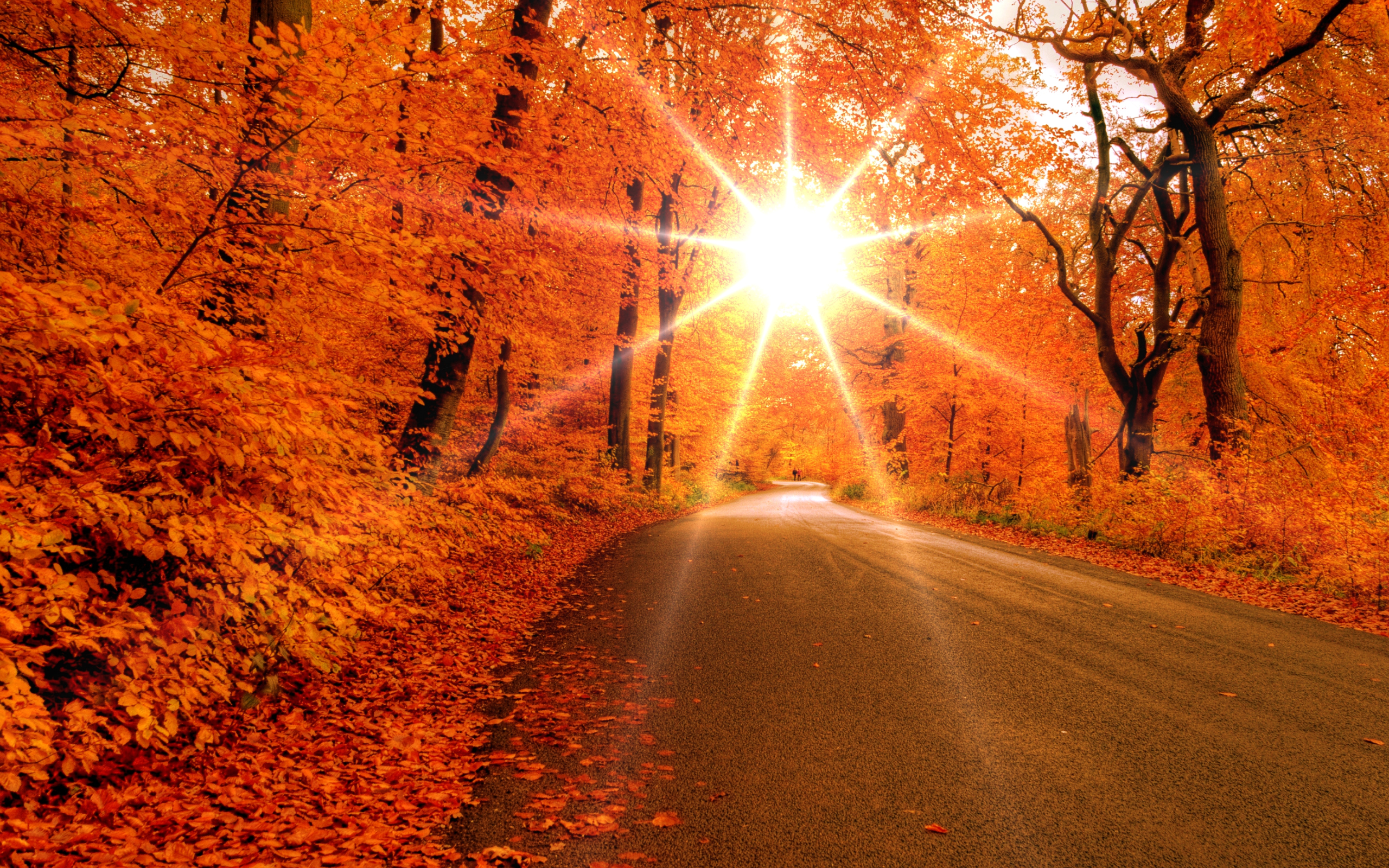 Autumn road wallpapers Autumn road stock photos 2560x1600