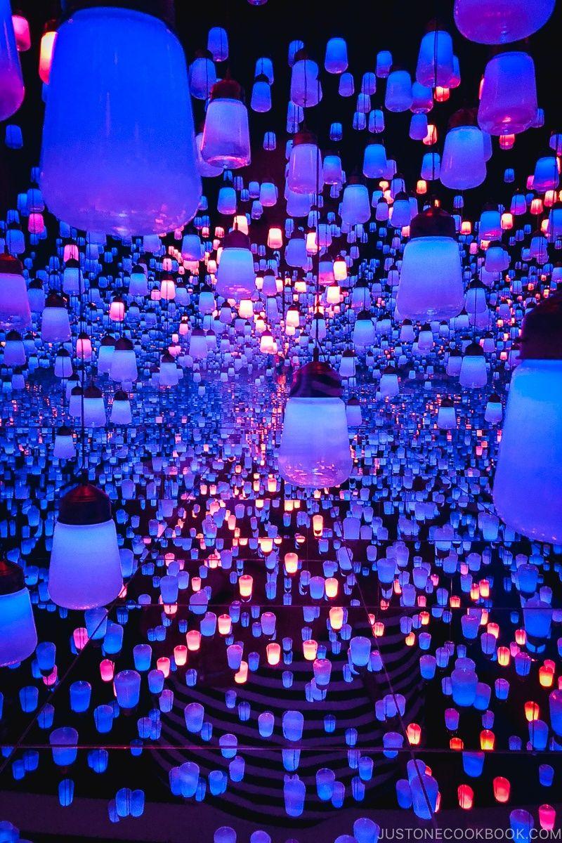 teamLab Borderless at MORI Building DIGITAL ART MUSEUM NIPPON 800x1200