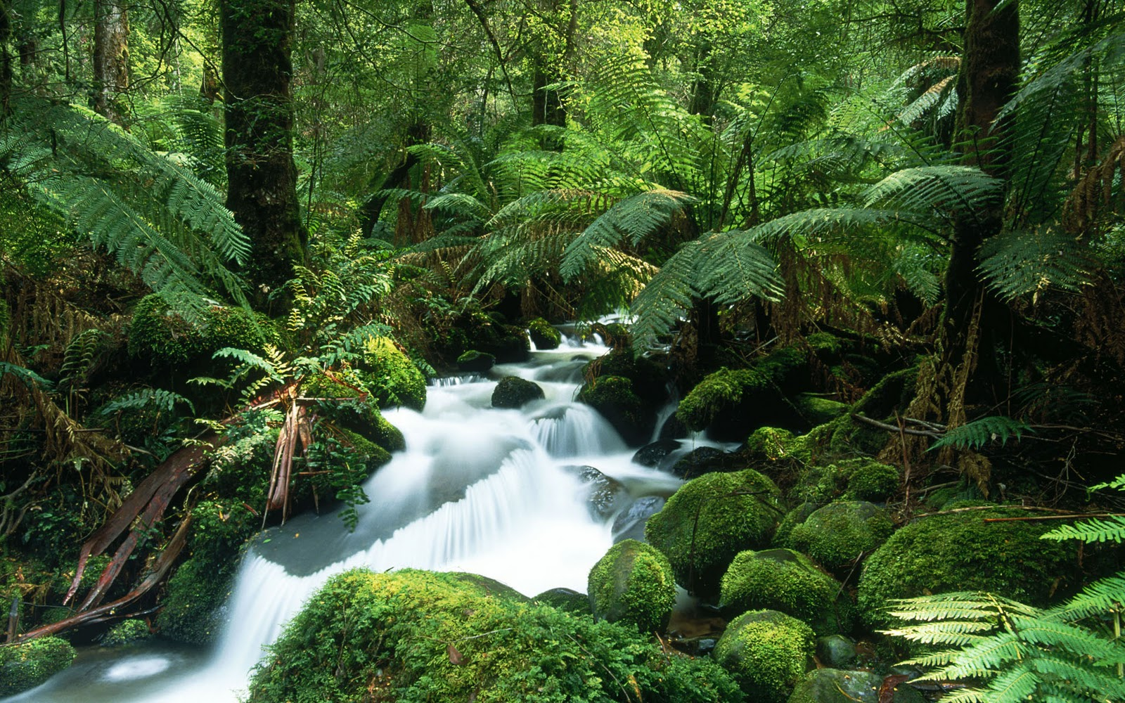 Tropical Rain Forest New High Definition Wallpapers 1600x1000