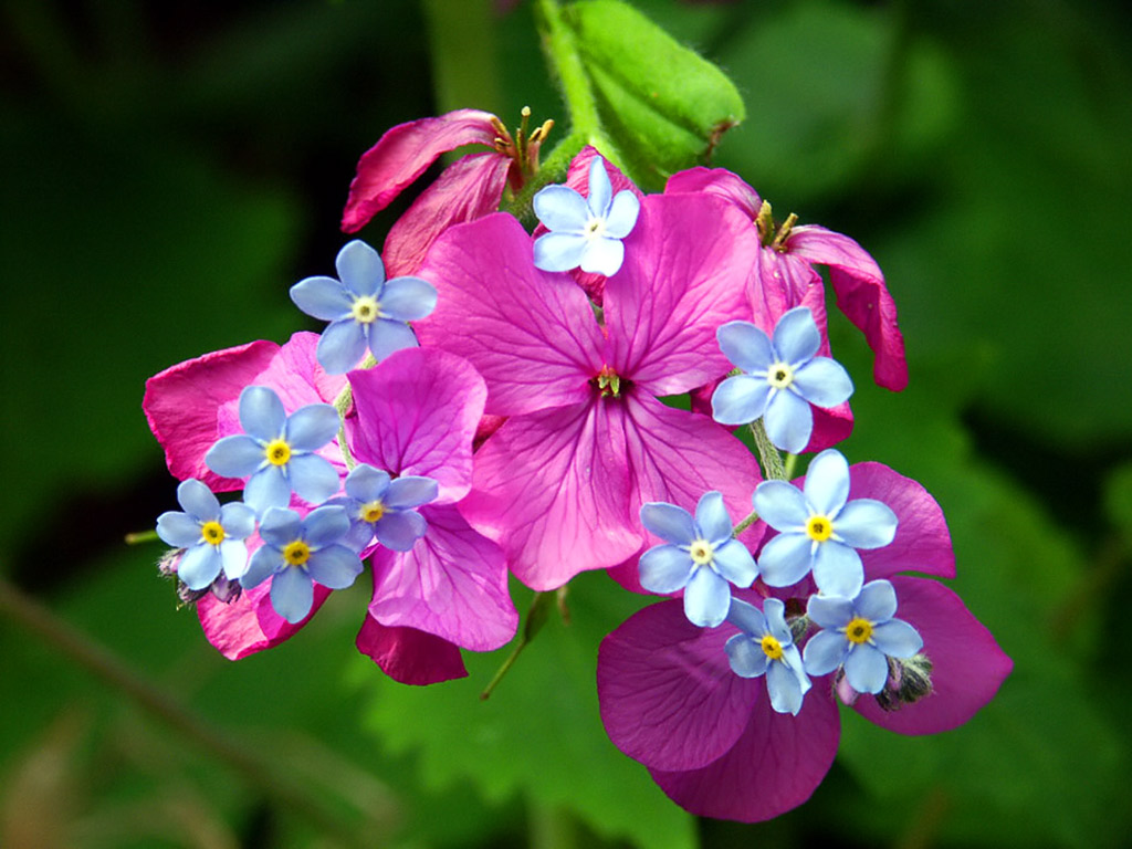 free spring flower wallpaper which is under the spring wallpapers 1024x768