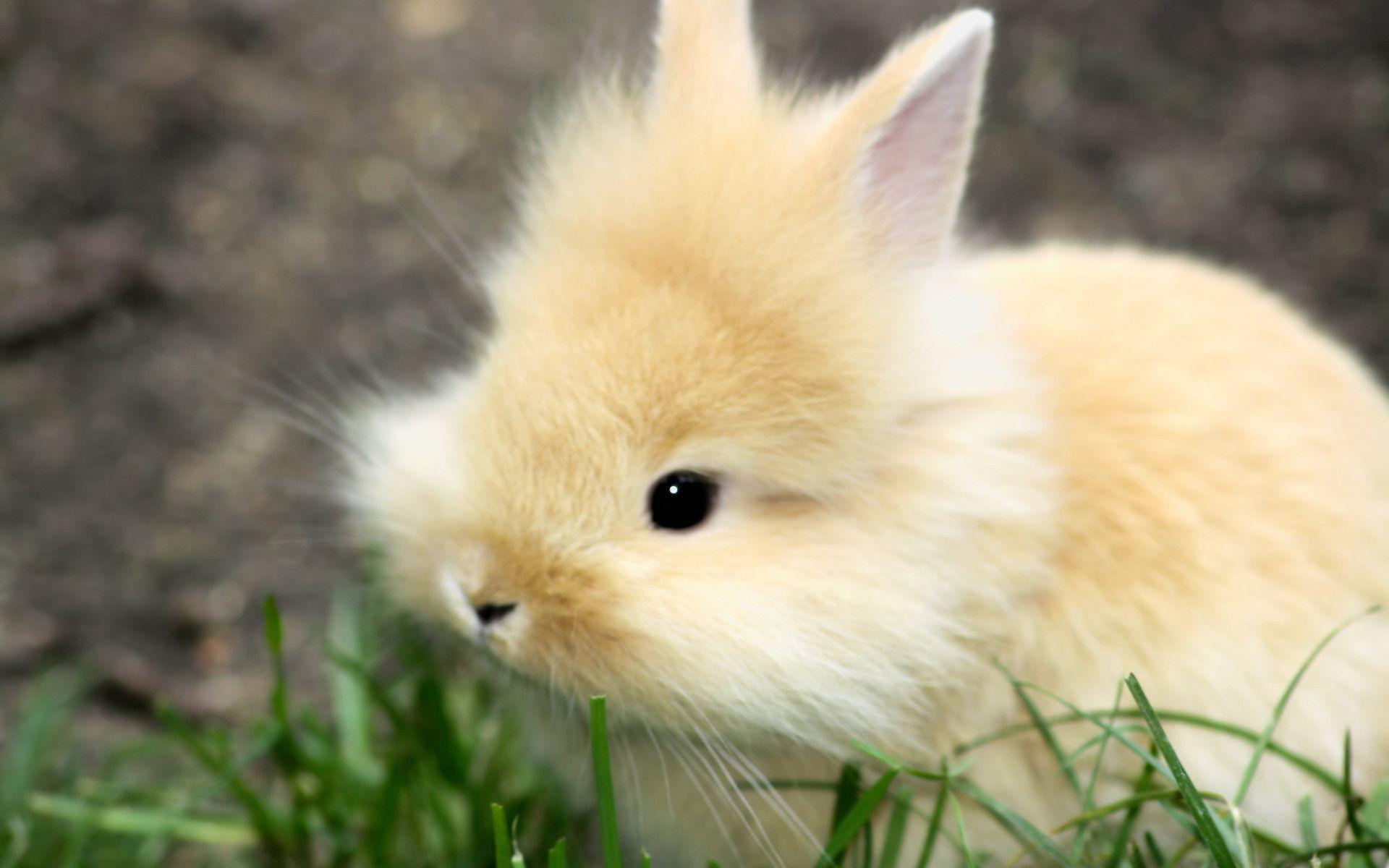 18561 bunny wallpaper 1920x1200