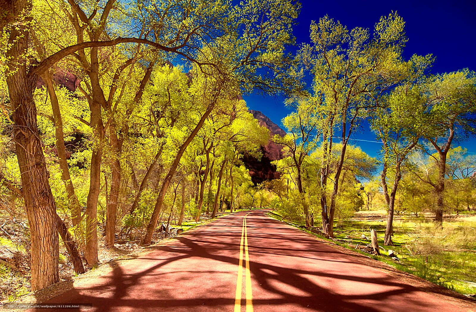 wallpaper Zion National Park Utah road trees desktop wallpaper 1600x1048