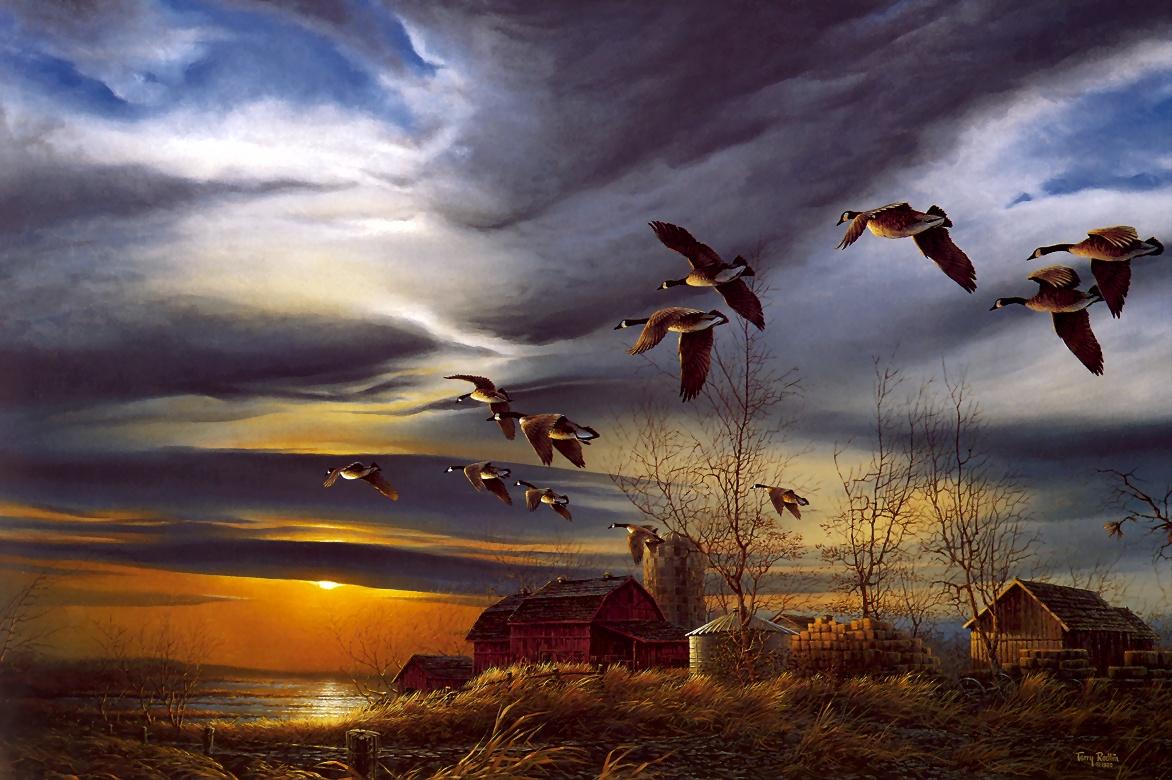 Ducks Flying Wallpaper