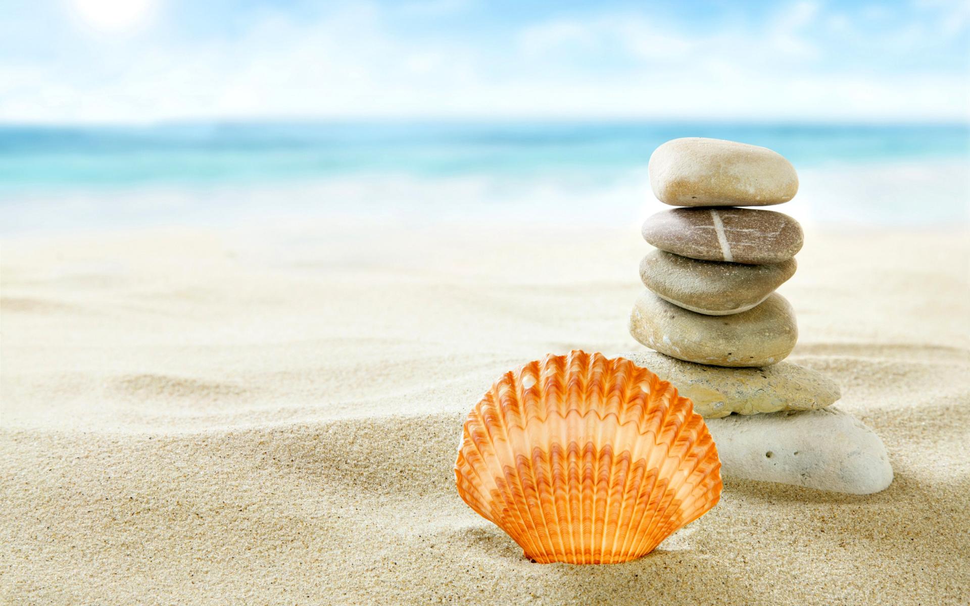 Sea Shell Wallpaper - WallpaperSafari