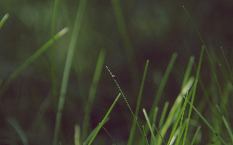Grassy - Macbook Pro Retina Ready Wallpaper