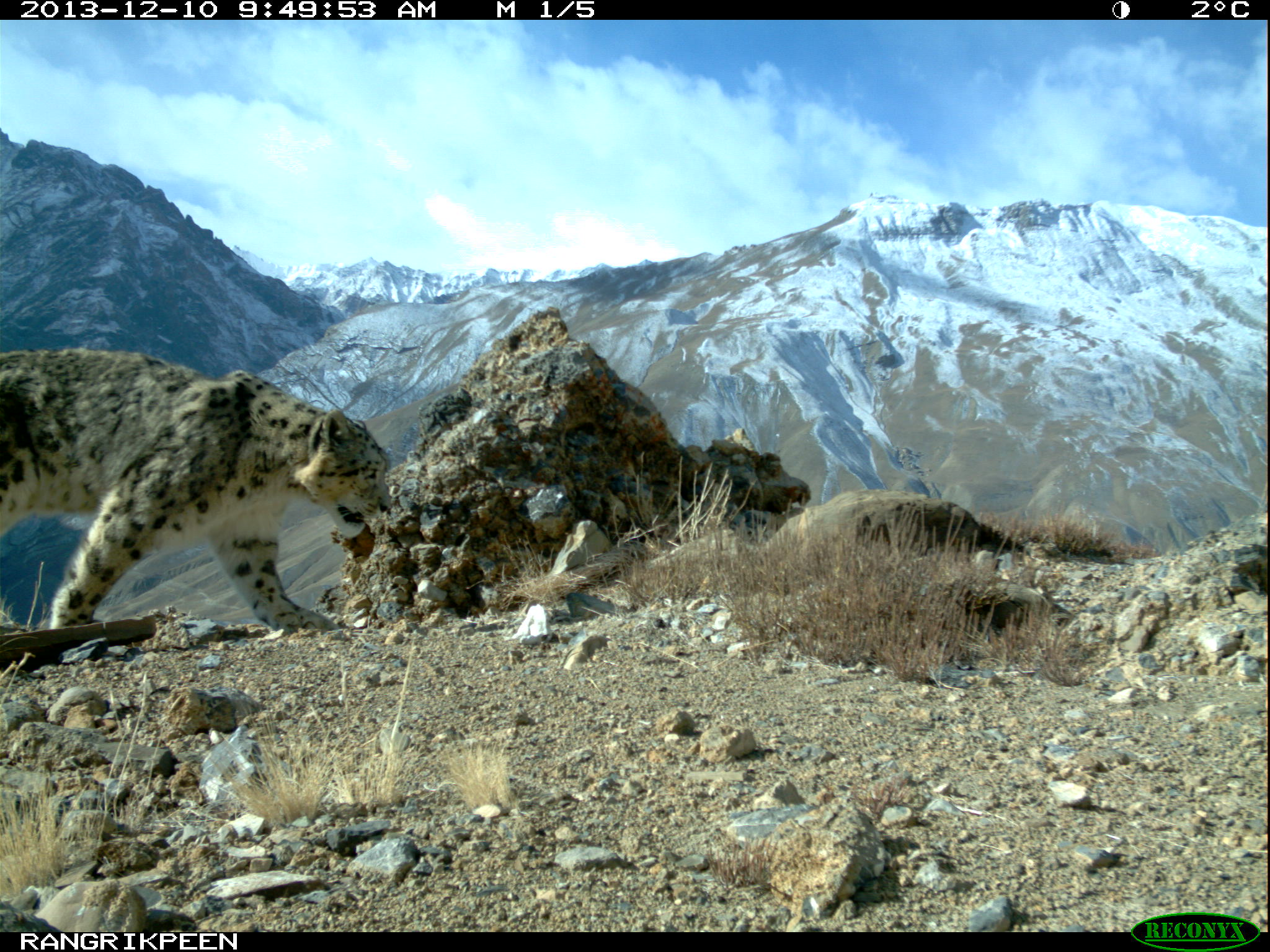 Photos By Ncf Indiasnow Leopard Trusthimachal Pradesh   Snow 2048x1536