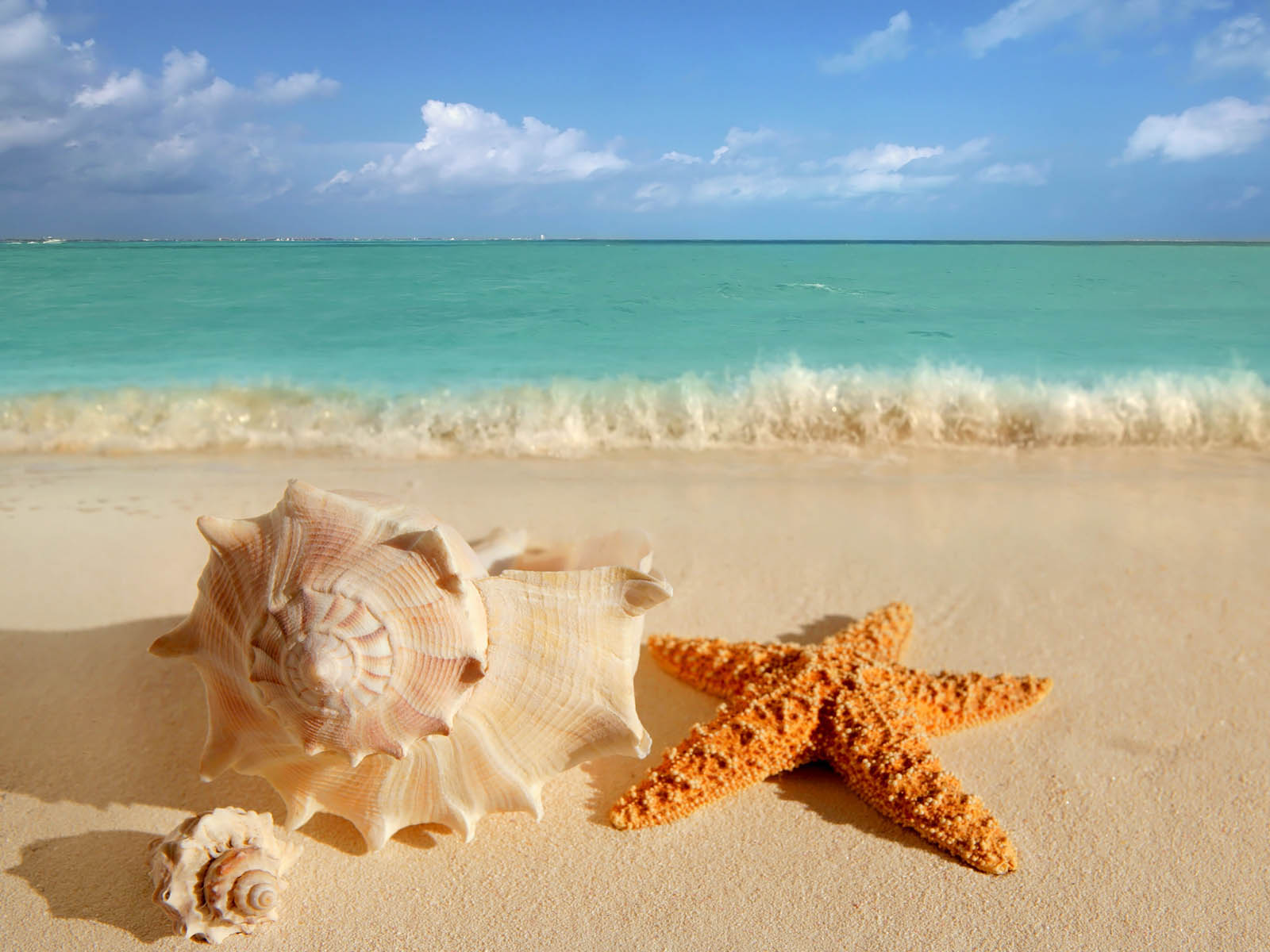 Download Tag Starfish Wallpapers Backgrounds S