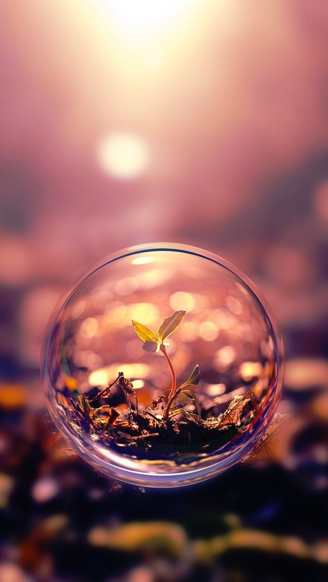 Leaves Plants Mobile Wallpapers in 2019 Bubbles wallpaper 640x1136