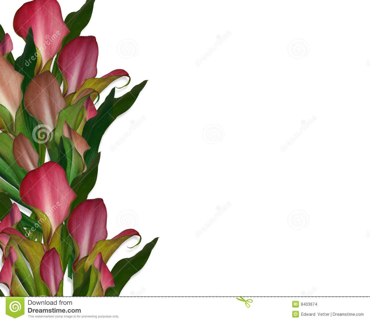 Download Calla Lily Clip Art Borders 1300x1130 47 Calla Lily