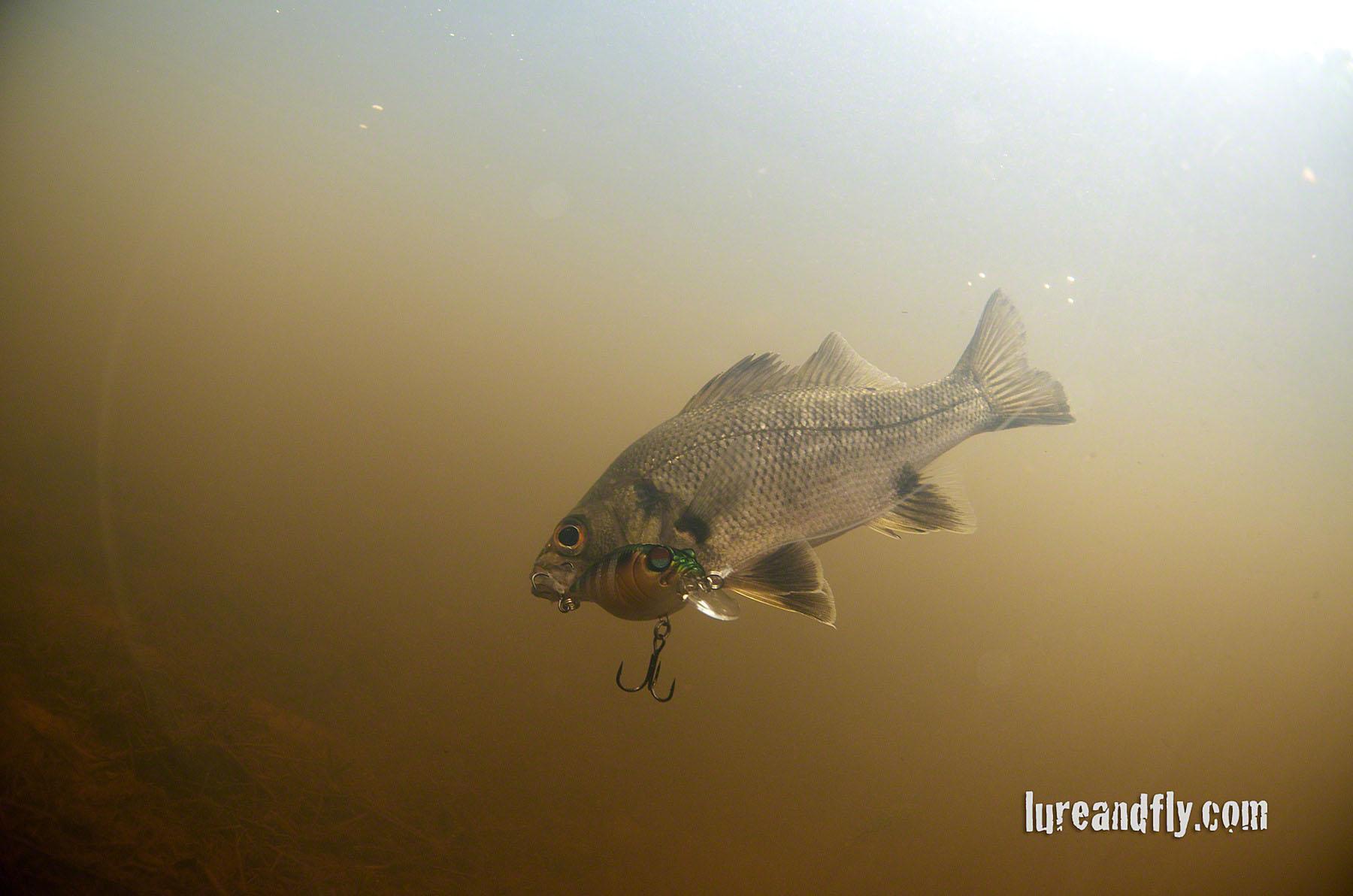 Bass Fishing Wallpaper Coolendel bass fishing 012jpg 1800x1192