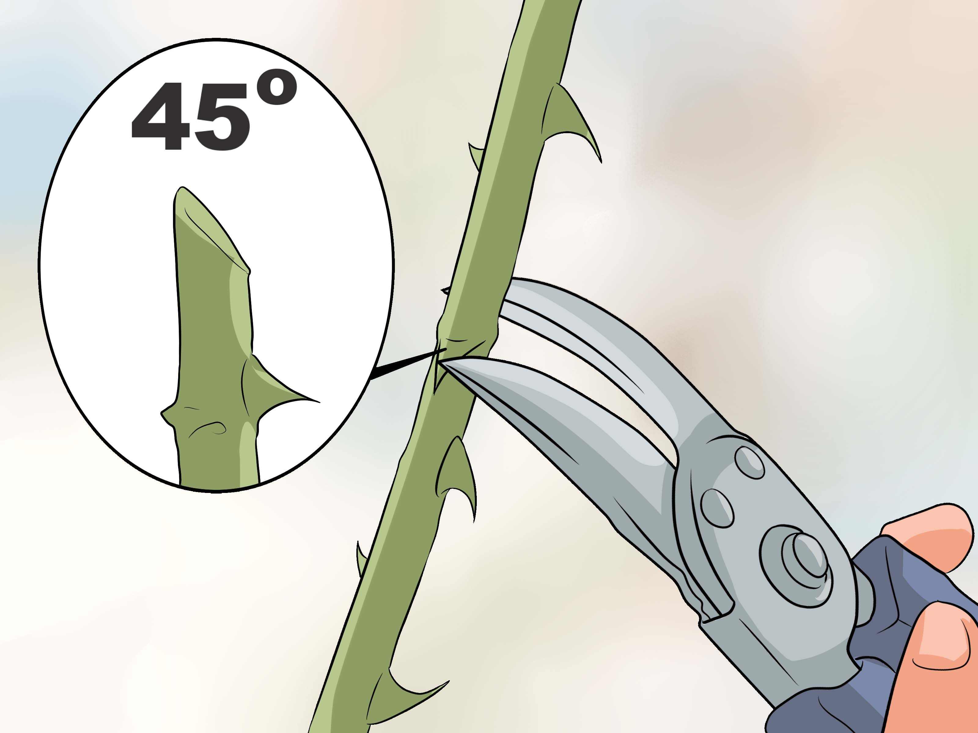 How to Deadhead Roses 5 Steps with Pictures   wikiHow 3200x2400