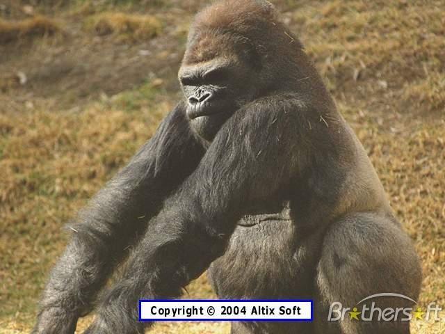 Download Monkeys Life Screensaver Monkeys Life Screensaver 106 640x480