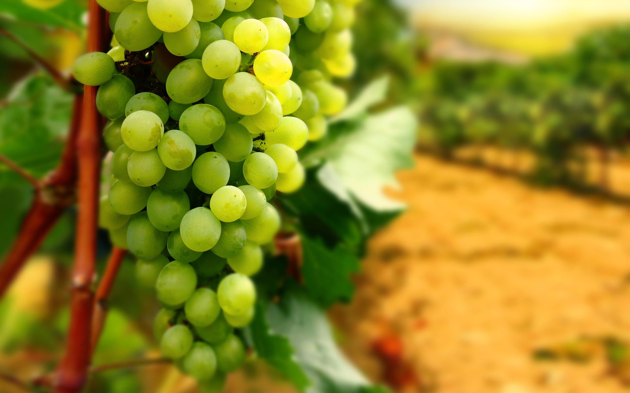 Grapes Fruit Wallpaper HD Desktop Images One HD 2560x1600