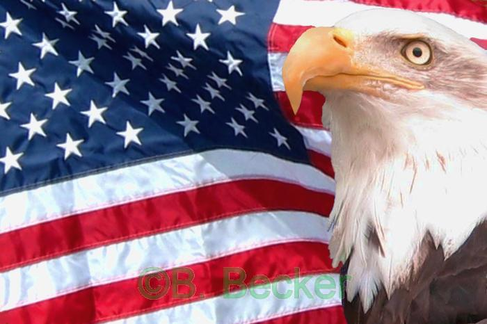 Wallpaper World American Flag Pictures and wiki 700x466