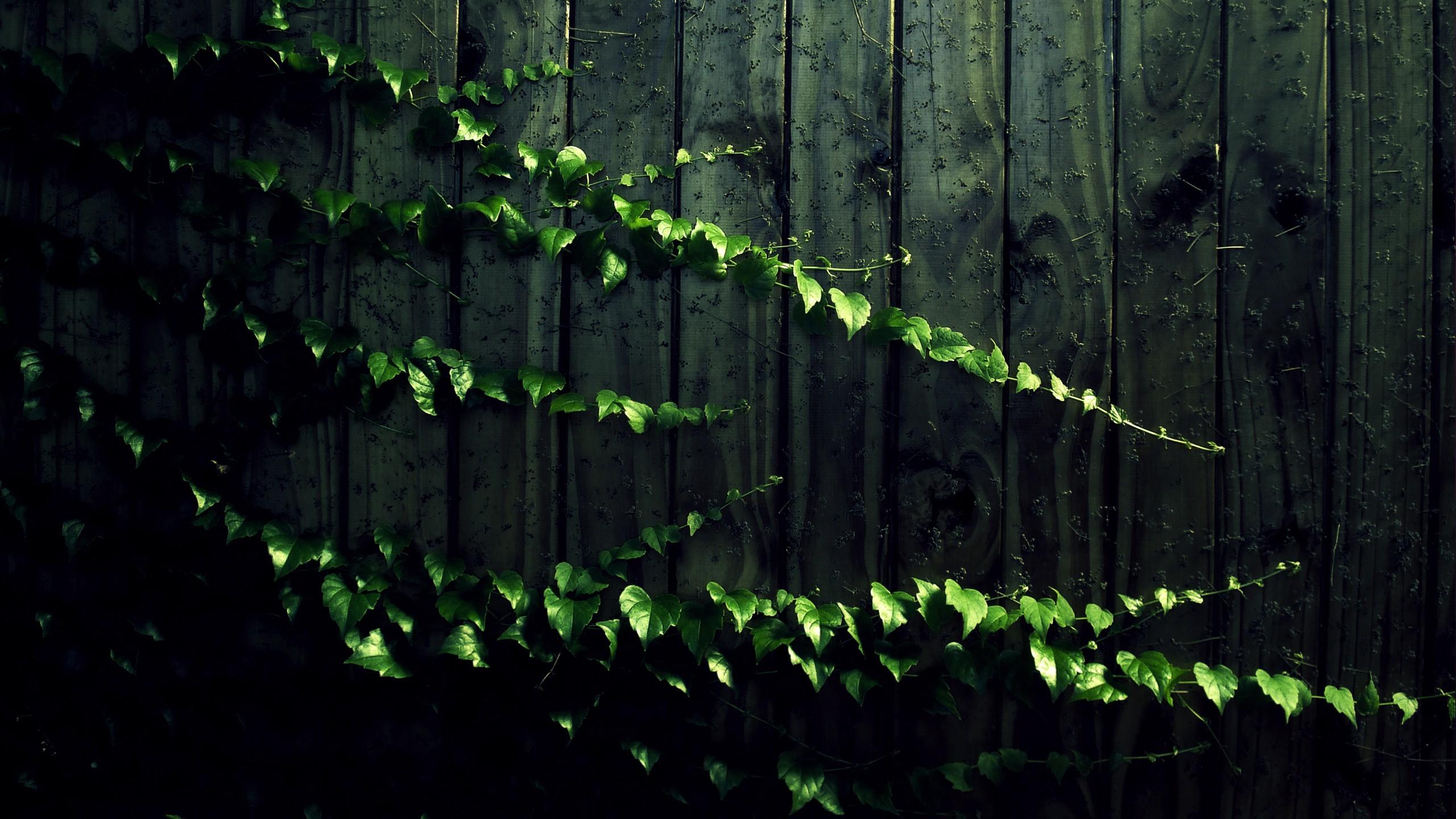 Landscape Images Nature Backgrounds Leaveswood Vines 2560x1440